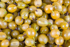 Fresh  gooseberry Royalty Free Stock Images