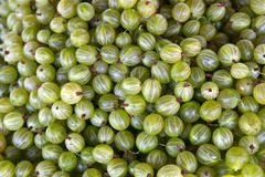 Fresh gooseberry Background Royalty Free Stock Image