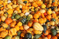 Fresh gourds, squashes, and Pumpkins Royalty Free Stock Photos