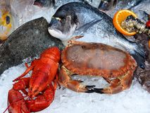 Fresh gourmet seafood with lobsters, crabs and fish royalty free stock photography