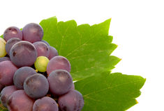 Fresh grape Royalty Free Stock Photo