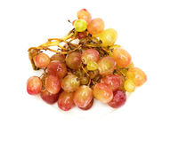 Fresh grape Stock Photography