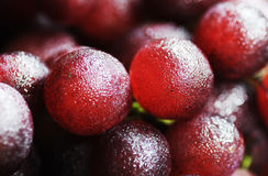Fresh grape. With dew, fruit royalty free stock image