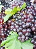 Fresh grape cluster with green leaf Stock Photo