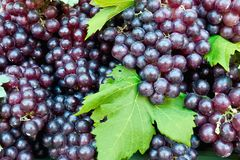 Fresh grape cluster with green leaf Royalty Free Stock Photos