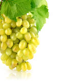 Fresh grape cluster isolated fruit Royalty Free Stock Photography
