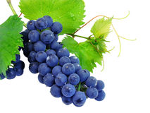 Fresh grape cluster with leafs. Fresh grape cluster with green leafs isolated with clipping path stock photo
