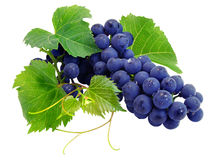 Fresh grape cluster with leafs. Fresh grape cluster with green leafs isolated with clipping path Stock Images