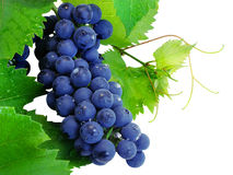 Fresh grape cluster with leafs. Fresh grape cluster with green leafs isolated with clipping path Royalty Free Stock Photography