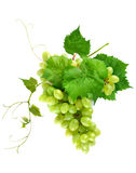 Fresh grape cluster with leaves Royalty Free Stock Image