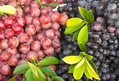 Fresh grape fruit Stock Photography
