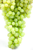 Fresh grape fruits  isolated Royalty Free Stock Photo