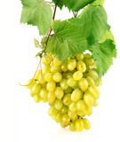 Fresh grape with green leaves isolated fruit Stock Photography