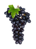 Fresh Grape isolated on the white back ground Stock Photography