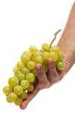 Fresh grape isolated on white Stock Image