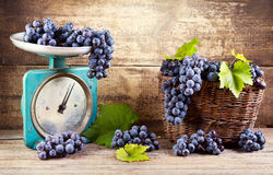 Fresh grape on old scale Royalty Free Stock Image