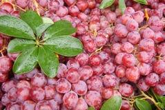 Fresh grape Royalty Free Stock Photo