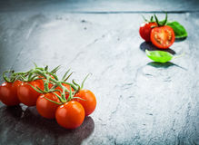 Fresh grape tomatoes on the vine Stock Photos