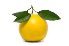 Fresh grapefruit. Stock Images
