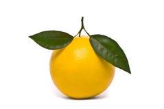 Fresh grapefruit. Royalty Free Stock Image