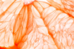 Fresh grapefruit Stock Image