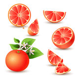 Fresh grapefruit with flowers Royalty Free Stock Images