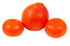 Fresh grapefruit and tangerines Stock Images