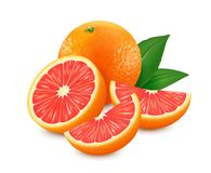 Fresh grapefruits with leaf isolated on white background. Realistic vector illustration. 3d vector image. royalty free illustration