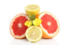 Fresh grapefruits and lemon on white bacground Stock Photos