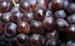Fresh grapes. Close-up of fresh grapes,rich nutrition Stock Photos