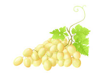 Fresh grapes. With green leaves on white background royalty free illustration