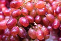 Fresh grapes close-up. Close-up of fresh grapes,rich nutrition. Just picking the grapes down. It is produced in the North of China Royalty Free Stock Photos