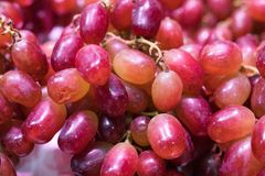 Fresh grapes close-up. Close-up of fresh grapes,rich nutrition. Just picking the grapes down. It is produced in the North of China Royalty Free Stock Image