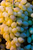 Fresh Grapes cluster  on sale. Fresh Grapes cluster on green market sale sale Stock Photo