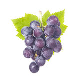 Fresh grapes and green leaf Stock Photography