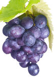 Fresh grapes and green leaf Royalty Free Stock Photos