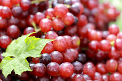 Fresh grapes with green leaves on a background. Stock Photos