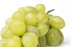 Fresh grapes Stock Image