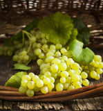Fresh grapes Royalty Free Stock Photography