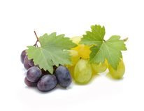 Fresh grapes with leaves Royalty Free Stock Photography