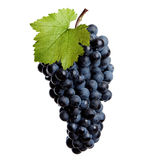 Fresh grapes of red wine Royalty Free Stock Photo