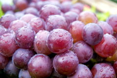 Fresh grapes Royalty Free Stock Photos