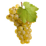 Fresh grapes of white wine Stock Image