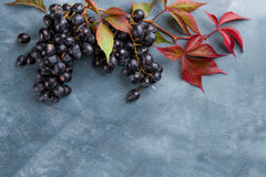 Fresh grapes on wooden background Stock Image