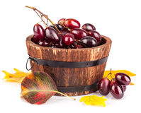Fresh grapes in wooden basket with yellow leaf Royalty Free Stock Photo