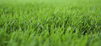 Fresh grass Stock Images