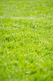 Fresh grass Royalty Free Stock Photos