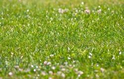 Fresh grass. Fresh spring grass lawn in park background Stock Photos