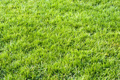 Fresh grass Stock Photography