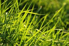 Fresh grass. Leaf highlighted by sun Royalty Free Stock Photos